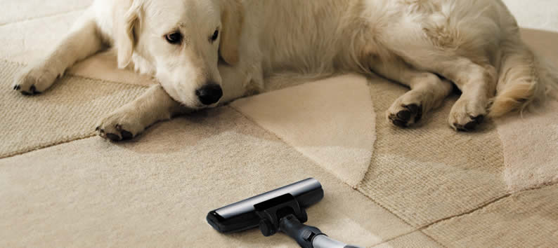 Pets = Carpet Odors and Stains